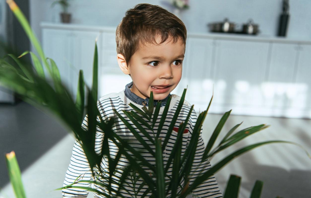 Myrkylliset huonekasvit lapsille ja lemmikille