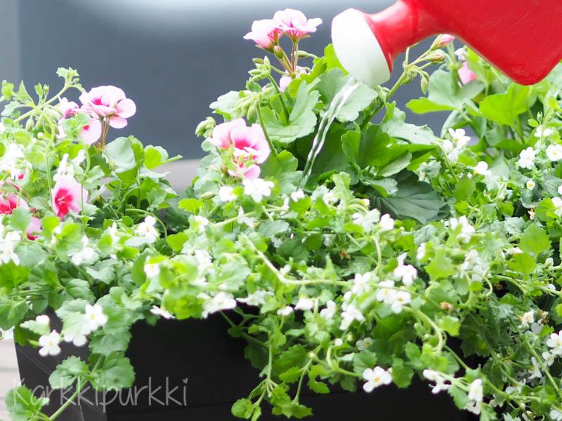 lumihiutale kukka